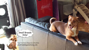 *HOLIDAYS FULL* Sleepovers for small dogs in home of trainer West Island Greater Montréal image 2