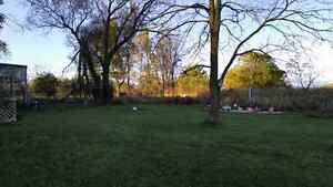 Free Walnut Trees London Ontario image 4
