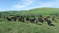 Wanted Summer Help on  Cattle Ranch
