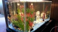 Starter Fish tank Kit - 10 Gallons