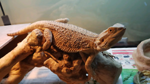 Need a home for your reptile?
