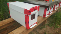 Bees- nucs for sale
