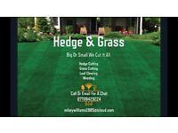 Hedge & grass