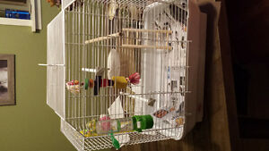 yellow and green bird for sale