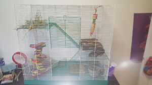 2 female rats and all the stuff