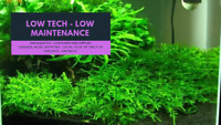 Amazing Deals on Easy Aquatic Plants!
