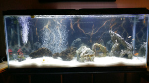 55 gal fish tank and stand