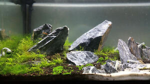 80 Lbs Aquarium Stone Kitchener / Waterloo Kitchener Area image 2