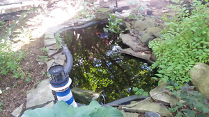 Pond and brand new pump