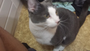 1 year old nutered cat looking for forever home
