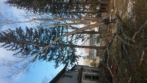 D.E.F Tree Services
