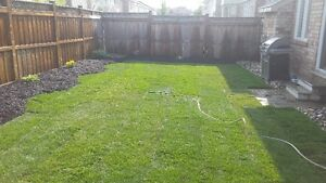 SOD special $1.50/SQFT FLAT RATE & FREE SPRINKLER London Ontario image 5