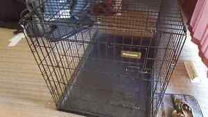 Giant Wire Petmate dog kennel