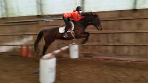 fancy papered tb mare good bloodlines