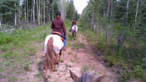 Family friendly pleasure- trail horses
