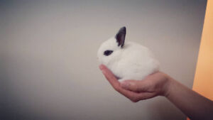 Dwarf bunnies (Rabbits) for your summer!