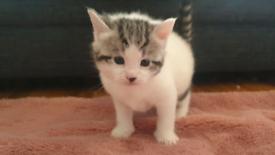 Kitten (SOLD PENDING VIEWING)