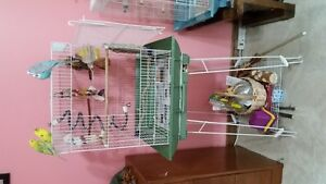 Larger Bird cage for sale