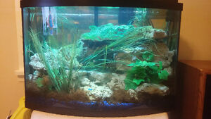 african cichlids for sale differnt kinds and sizes 2.50 and up Windsor Region Ontario image 7