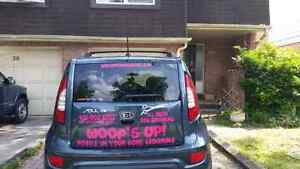 All Breed Mobile Pet grooming