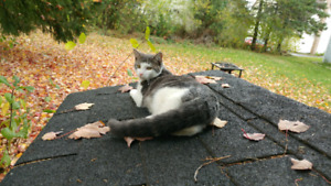 Have you seen this cat? (Grey and white) Lincoln Road area