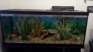 75 Gallon Fish tank: Comes with 5 fish, accessories, and stand
