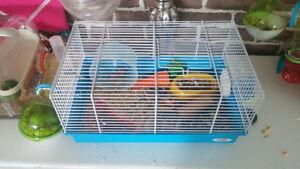 Hamster adoption