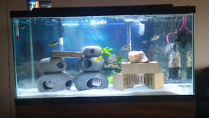 Looking for 75 gallon fish tank with stand!!