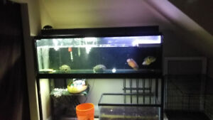 135 gallon fish tank up for grabs