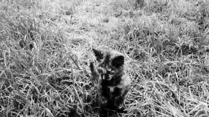 kitties for sale