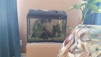 aquarium 20 gallon a vendre