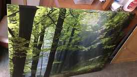 Large Forrest canvas reduced to sell
