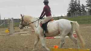 Quiet Horse for Part Lease/Board