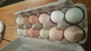 FARM FRESH FREE RANGE CHICKEN EGGS