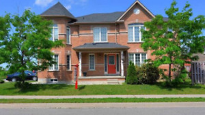 New 2 bedroom Brampton basement  for rent (Chinguacousy/Wanless)