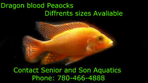 Color your tank with fish from Senior and Son Aquatics!