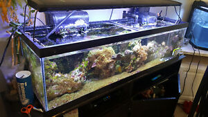 30 gallon reef tank system 6472224717