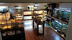 Reptiles, Feeders & Accessories @ Prehistoric Pet Evolution