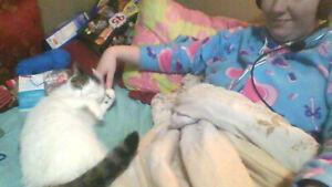 lolst male cat