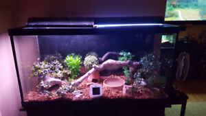 90gal aquarium with stand.