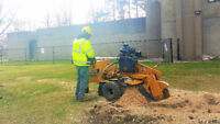 Stump Grinding Service & Stump Removal/ Tree Trimming, Pruning