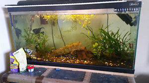 35 gallon aquarium with Fish