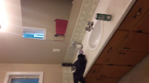 Looking for roomate