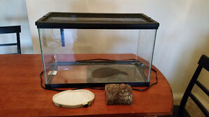 Reptile Tank with heating mat