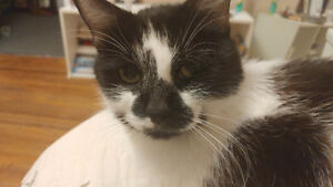 Sweet black and white cat needs new home