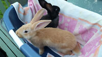2  Freindly Male Bunnies 5 mths old