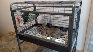 6 Months old rabbit with cage and basic accessories for new home