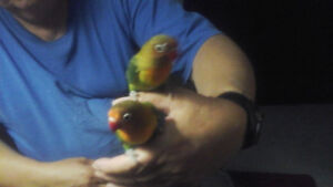 HAND TAMED  BIRDS FOR SALE