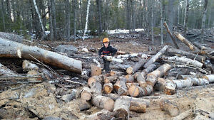 Firewood forsale save 30 per bushcord