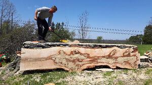 "Portable Saw Mill Service: Custom Sawyer can Saw Logs 55"" Wide Kitchener / Waterloo Kitchener Area image 10"